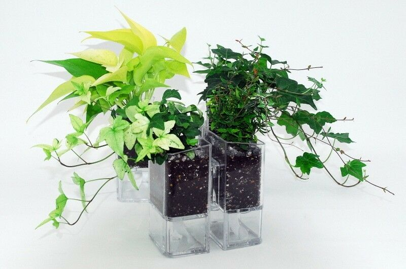 Wall Planter Self Watering Flowerpot Wall Mount Wall