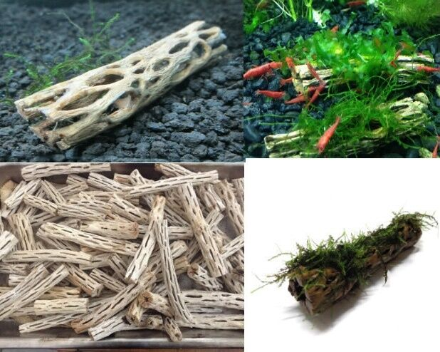 Cholla wood 7cm lot x 2 holley bois racine crevettes nano for Racine aquarium