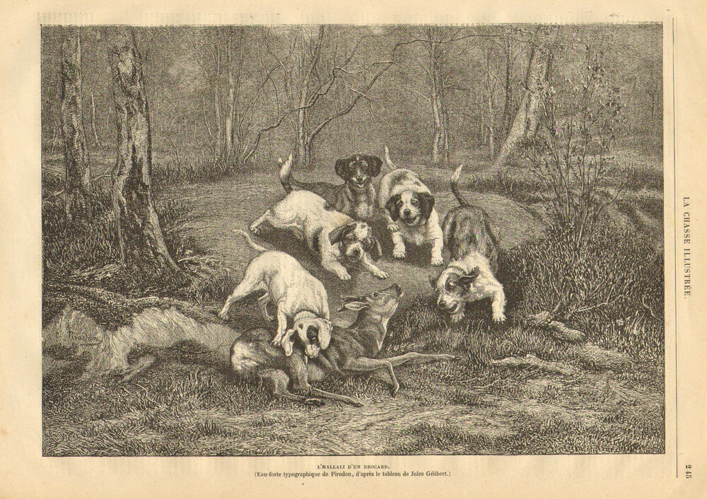 Hunting Dogs Kill A Deer, Stag, Vintage 1878 French ...