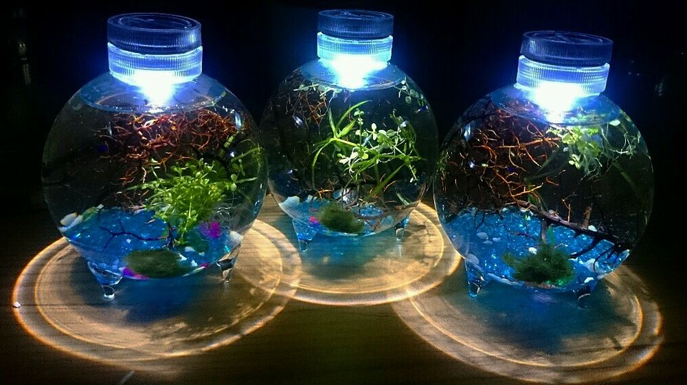 Enclosed self sustaining water plant eco system gift idea for Eco fish tank