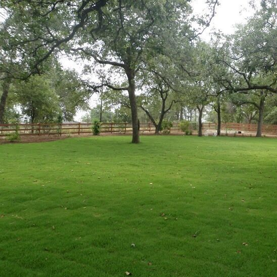 Zenith zoysia grass seed 2 lbs 100 pure 2000 for 2000 sq ft to yards