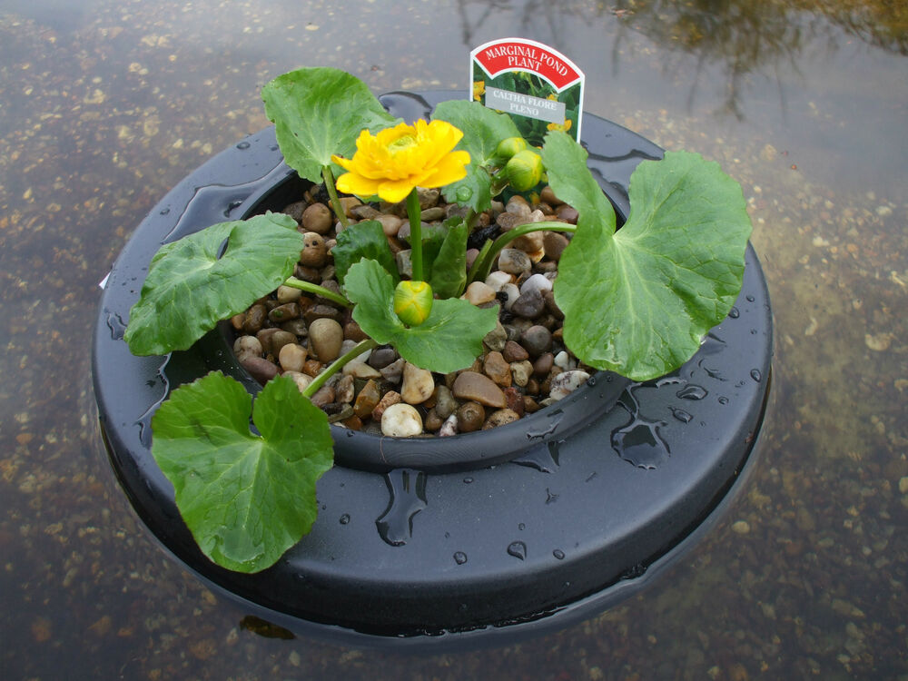 Floating pond plant island pot basket with or without for Floating plant pots