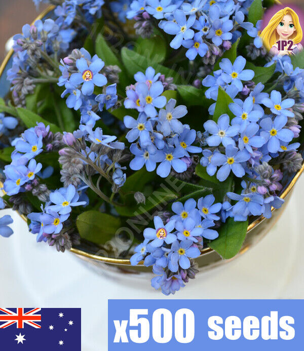 forget me not seeds myosotis x1000 seed australia ebay. Black Bedroom Furniture Sets. Home Design Ideas
