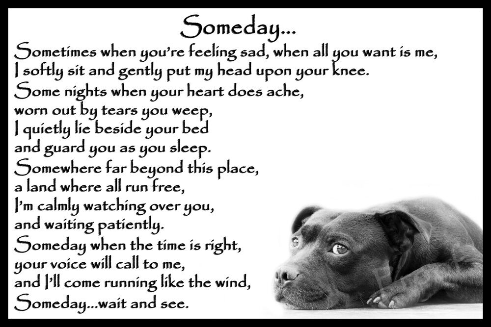 Pet Loss Poems For Dogs
