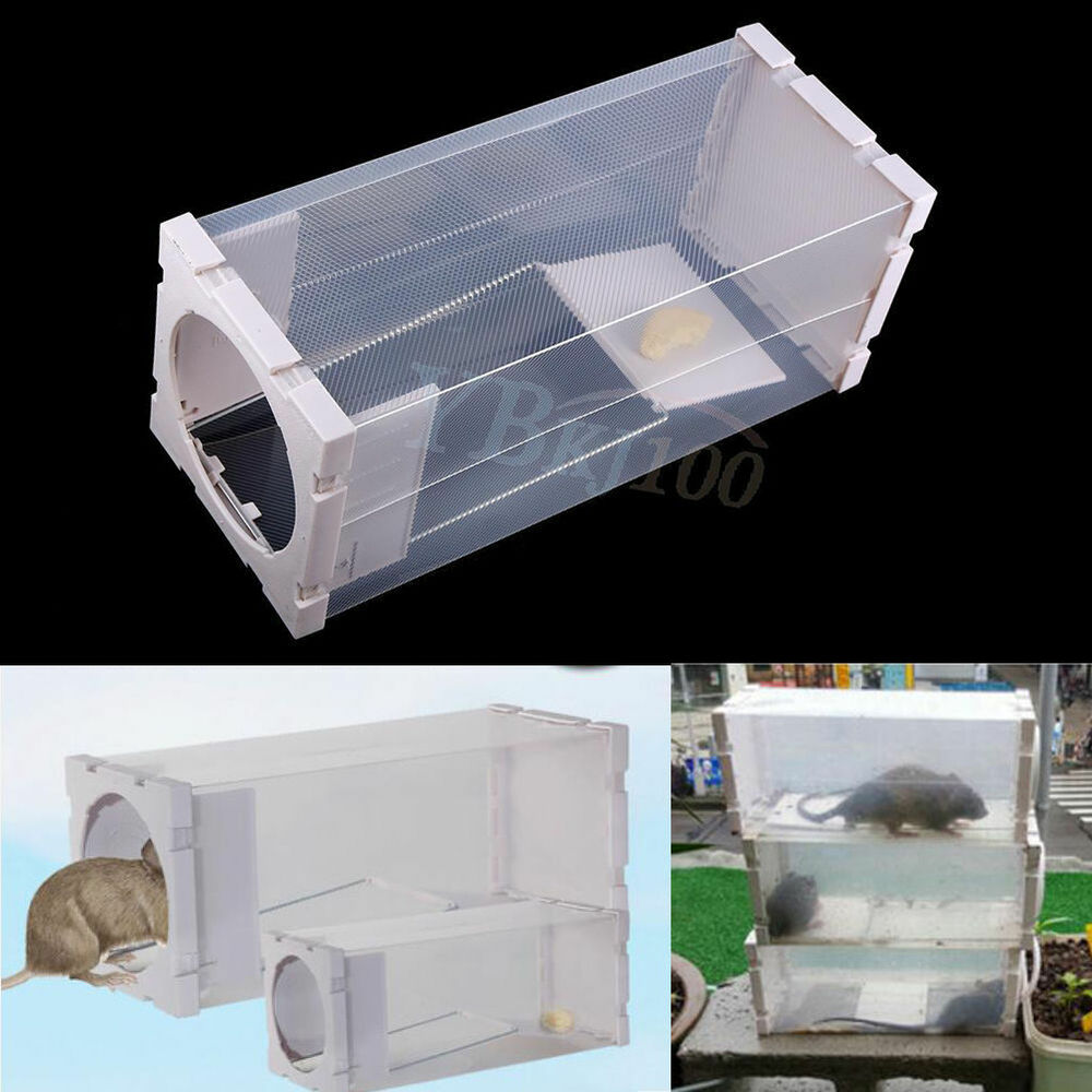 Safety rodent animal mouse mice rat humane live trap cage