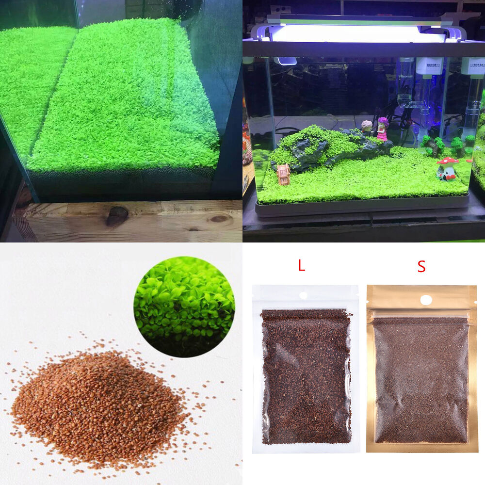 how to clean a fish tank with live plants