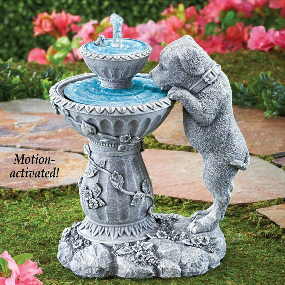 Labrador Puppy Dog Drinking From Flowing Fountain Outdoor ...