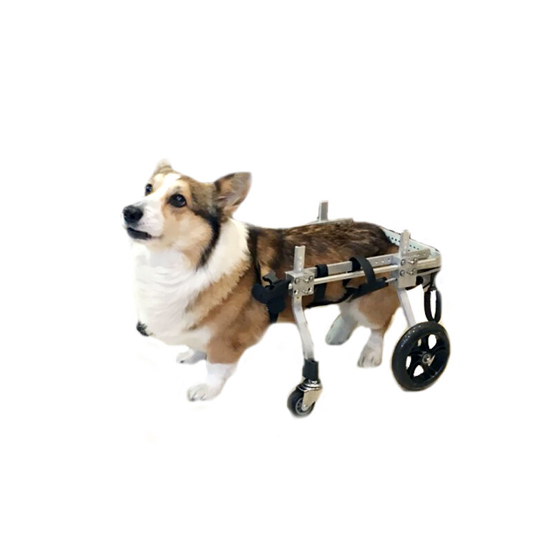 Walk Dog On Scooter