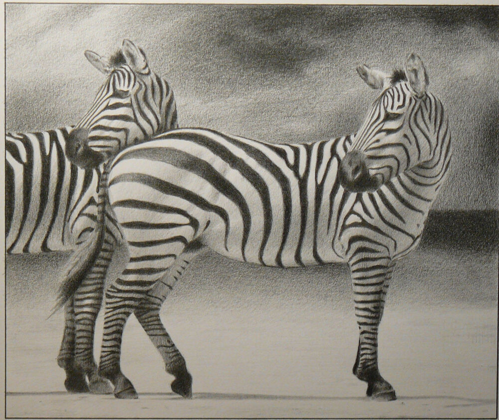 Details about zebra photo realistic animal pencil drawing from hungary