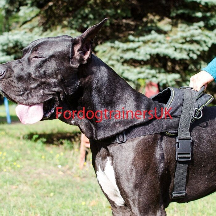 Extra Large Nylon Dog Harness for Great Dane | Strong Nylon for Any