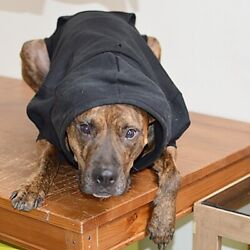 Large Black Fleece Dog Hoodie - Warm and Comfy for Dogs - Free Shipping!