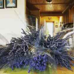 Fresh Dried Lavender Bunches Giant Hidcote or Grosso Lavender Picked 2021
