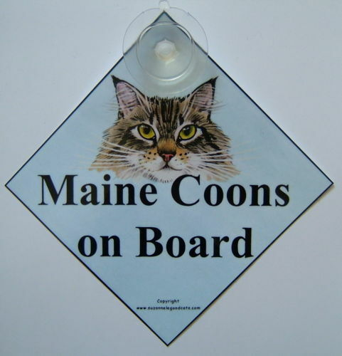 Maine coon cat on board in car painting laminated sign
