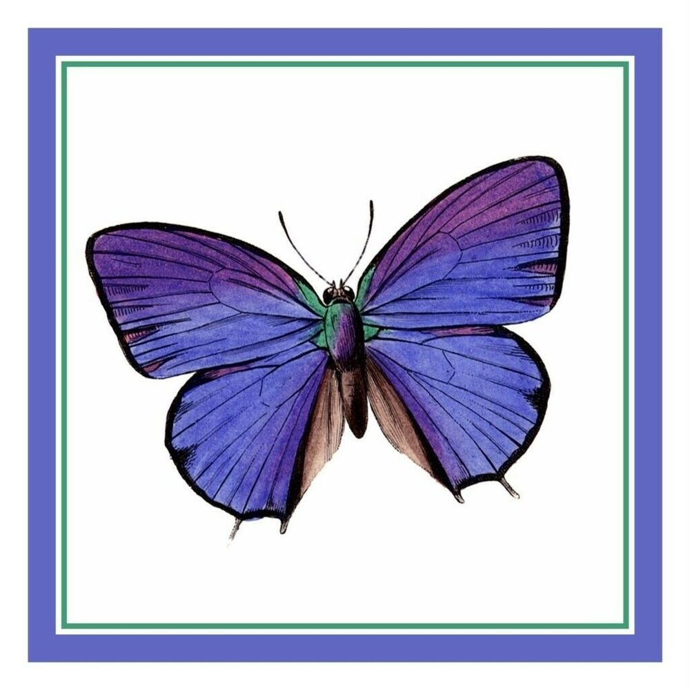 colorful lavender butterfly counted cross stitch chart ebay