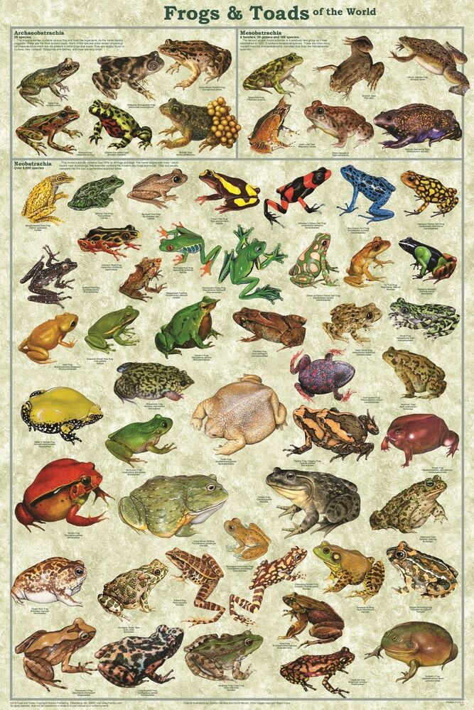FROGS & TOADS OF T...