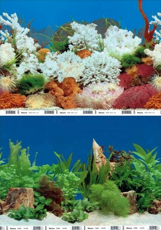Aquarium fish tank background landscape 2 sided poster Aquarium landscape
