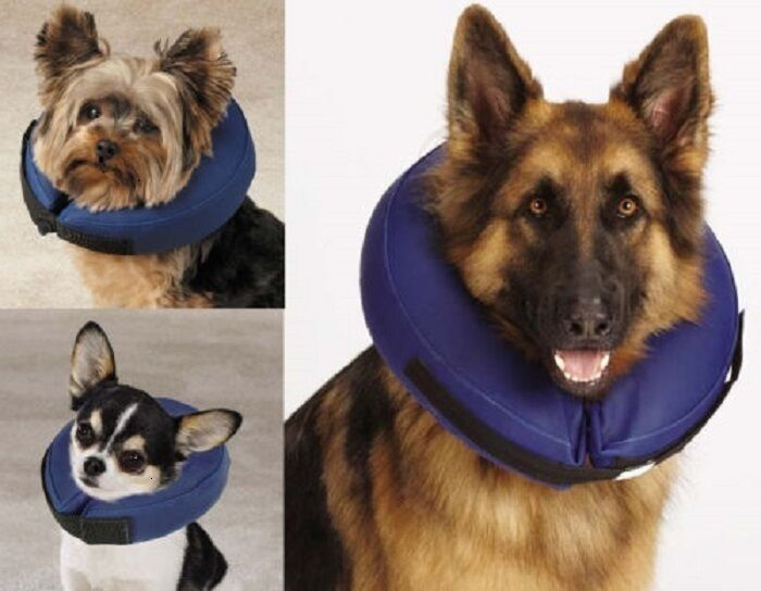 Where Can I Buy A Dog Cone Collar