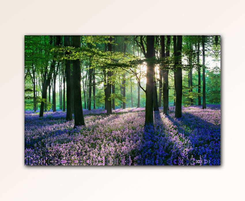 100x70cm leinwand bilder xxl wandbild lavendel wald natur b ume leinwandbild ebay. Black Bedroom Furniture Sets. Home Design Ideas