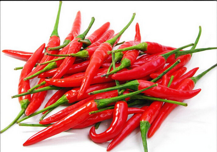 30 seeds thai red chili pepper very hot free shipping ebay for Giant chilli thai