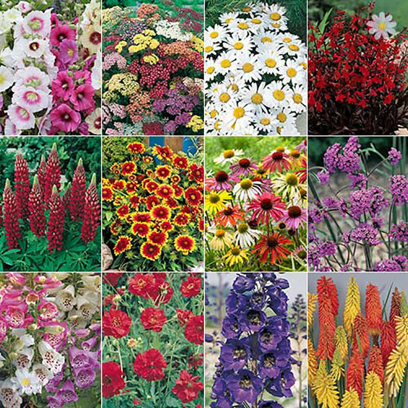 Complete hardy garden perennial plant collection 24 plug plants ebay - Flowers planted may complete garden ...