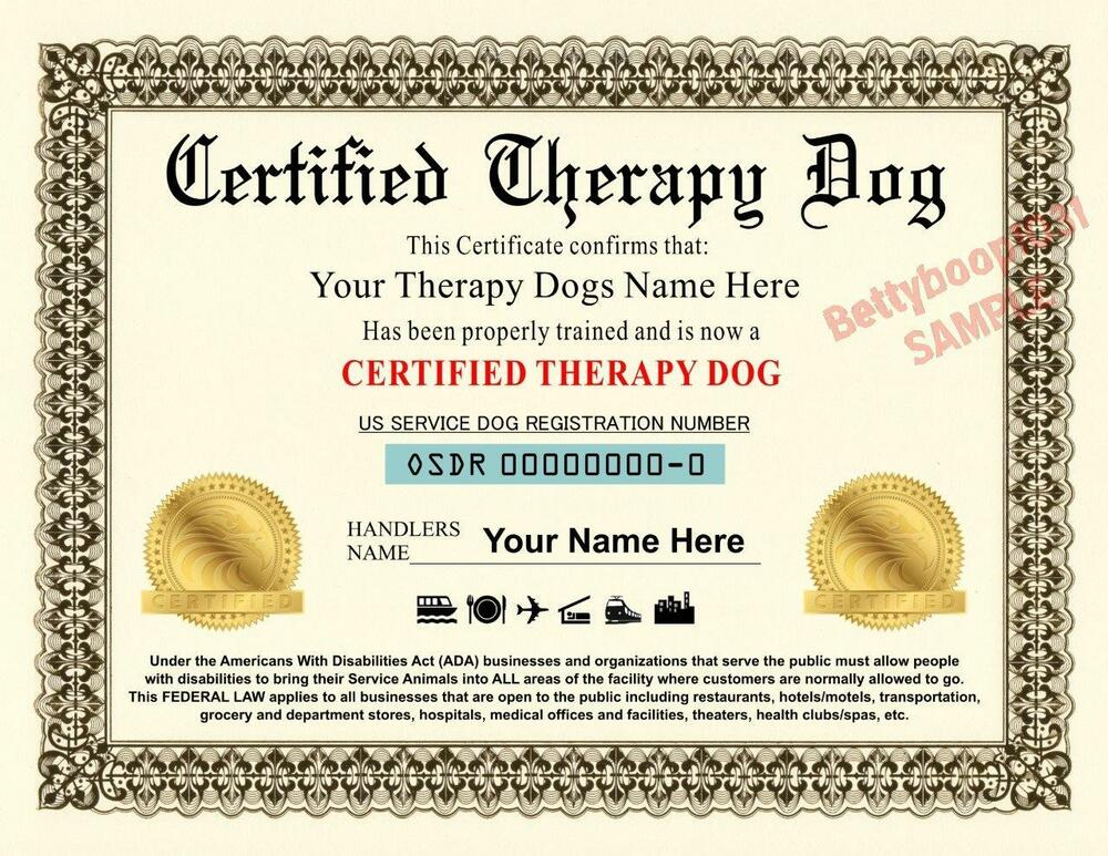 Therapy Dogs Certificate - Goldenacresdogs.com