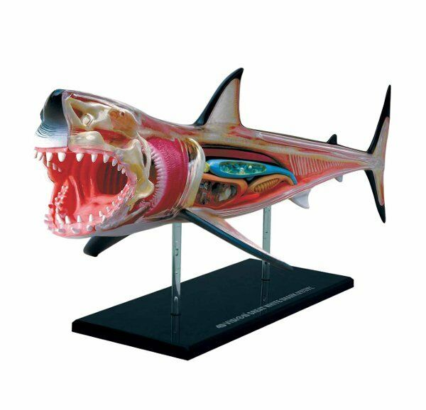Anatomy Of A Great Picture: Thames & Kosmos ANATOMY MODEL Puzzle GREAT WHITE SHARK
