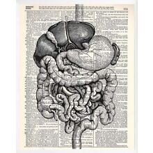 "Internal Human Organs Art Print On Vintage Dictionary Paper (8""x10.5"") • NEW"