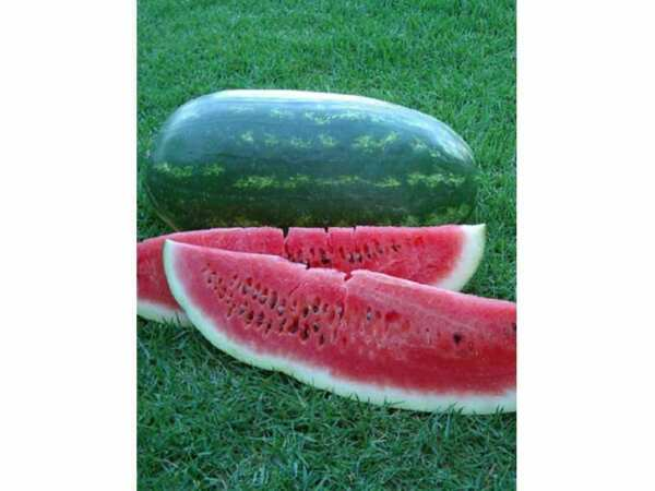 20 CONGO WATERMELON  SEEDS 2019 ( NON-GMO FREE SHIPPING! )