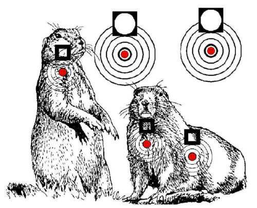 Delicate image in printable animal targets