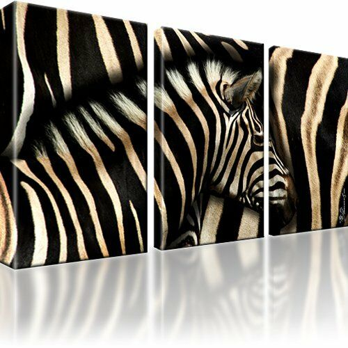 zebra tiere afrika bild 3 teilig bilder leinwand wandbild kunstdruck ebay. Black Bedroom Furniture Sets. Home Design Ideas