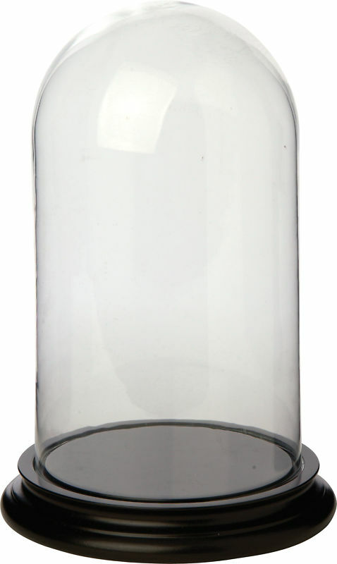 Buy Glass Dome With Wooden Base