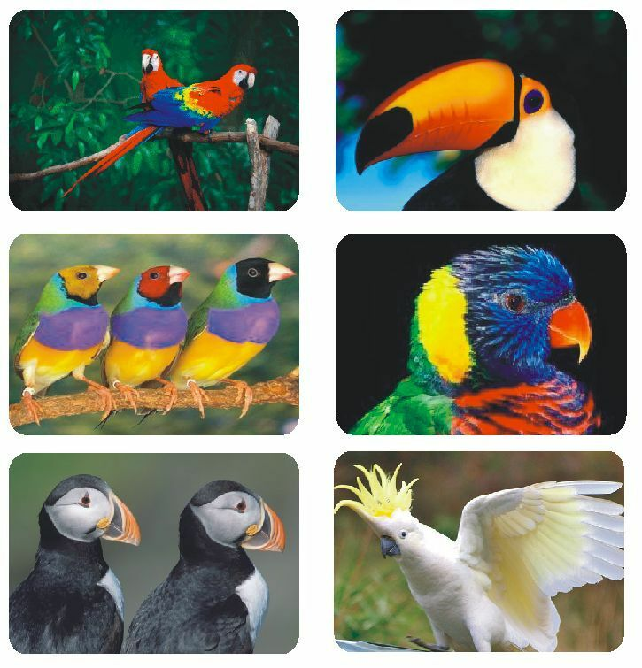 Exotic birds labels stickers decals crafts teachers for Craft schools in usa