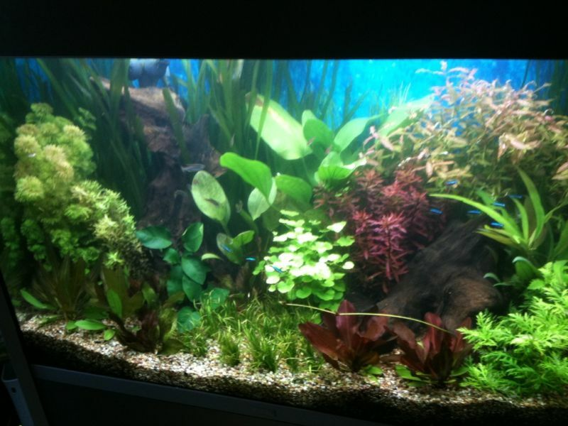 live aquarium aquatic tropical fish tank plants collection for large tank ebay