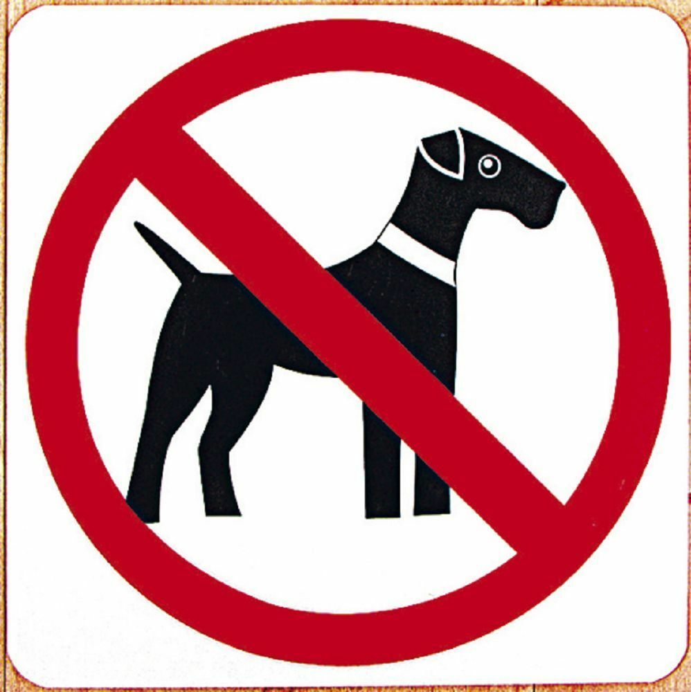 schild warnschild 20 x 20 cm zutritt fuer hunde verboten 308330 ebay. Black Bedroom Furniture Sets. Home Design Ideas