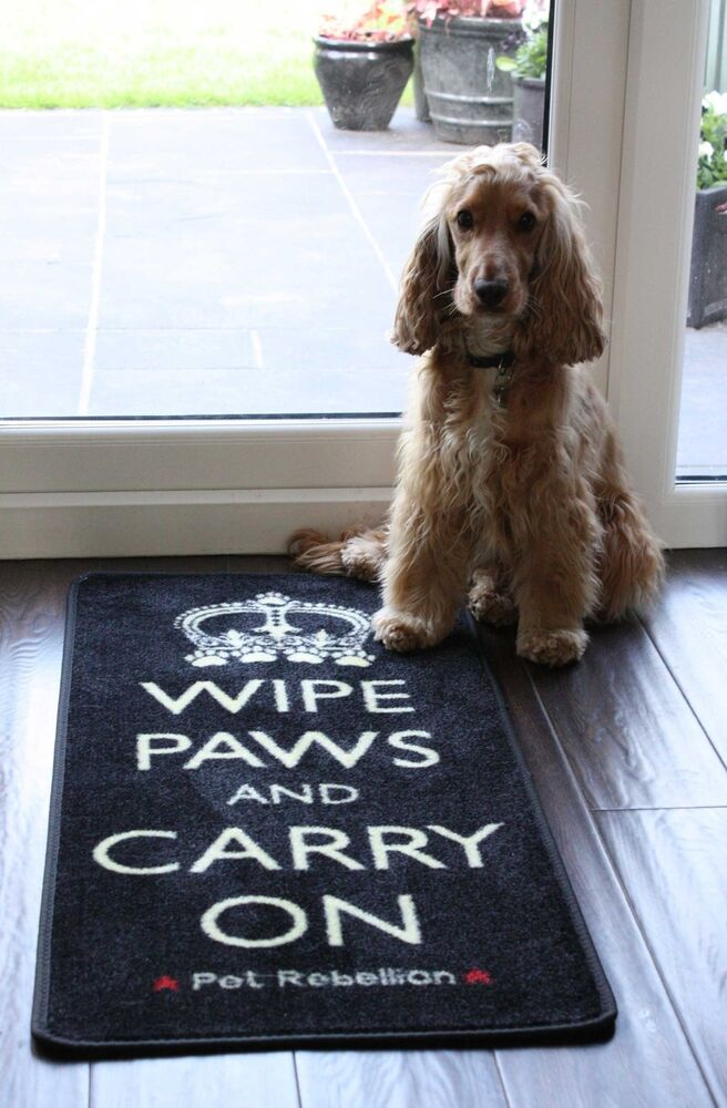 how to stop dog crapping on floor