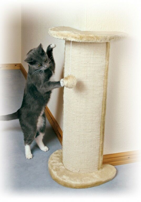 supplements for cats with kidney disease