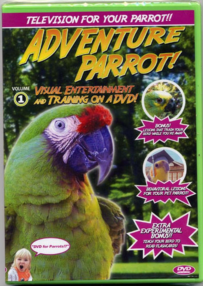 how to train a parrot to talk in hindi