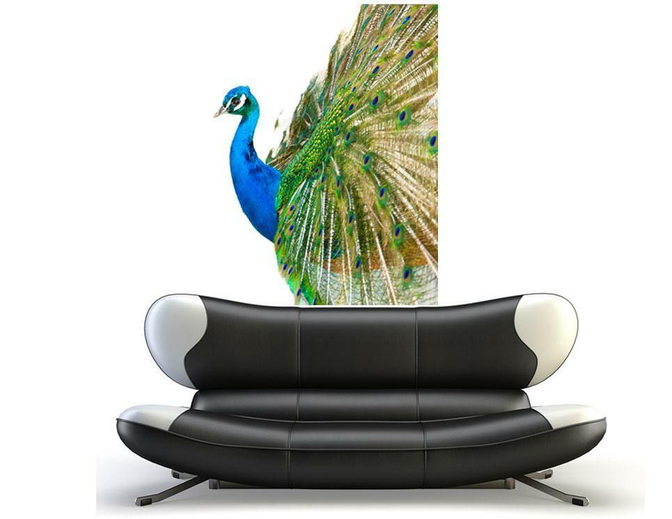 wall decal peacock bird feathers vinyl sticker room tattoo new hd photo wallpaper peacock s feathers wall mural wall