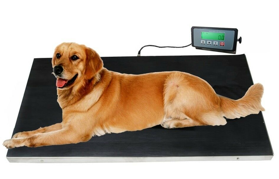 Pet Scale For Dogs