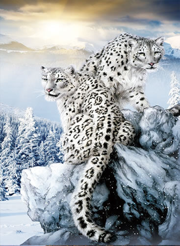 Leopard Wall Art Home Decor ~ Snow leopard lenticular d picture animal poster painting