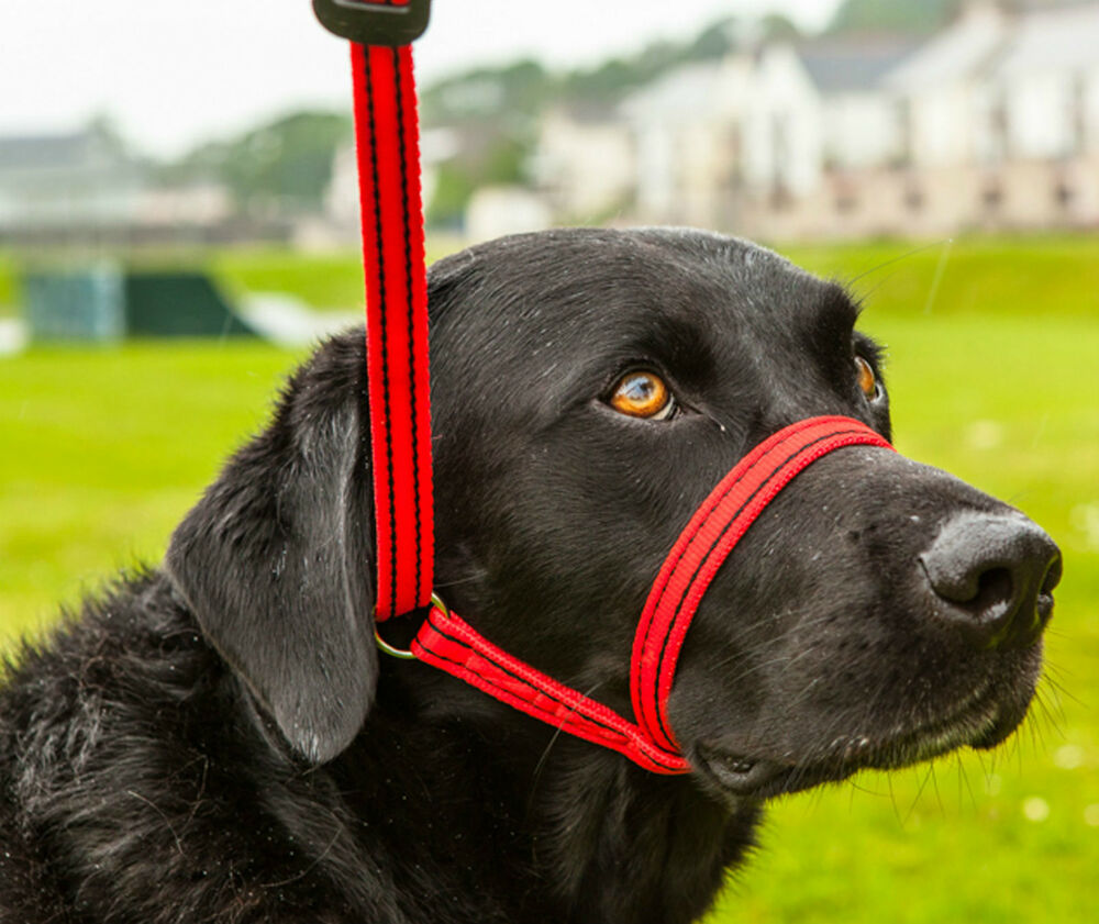 Dog Collar For Obedience Training