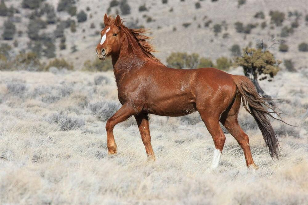 BEAUTIFUL MUSTANG HORSE GLOSSY POSTER PICTURE PHOTO PRINT ...