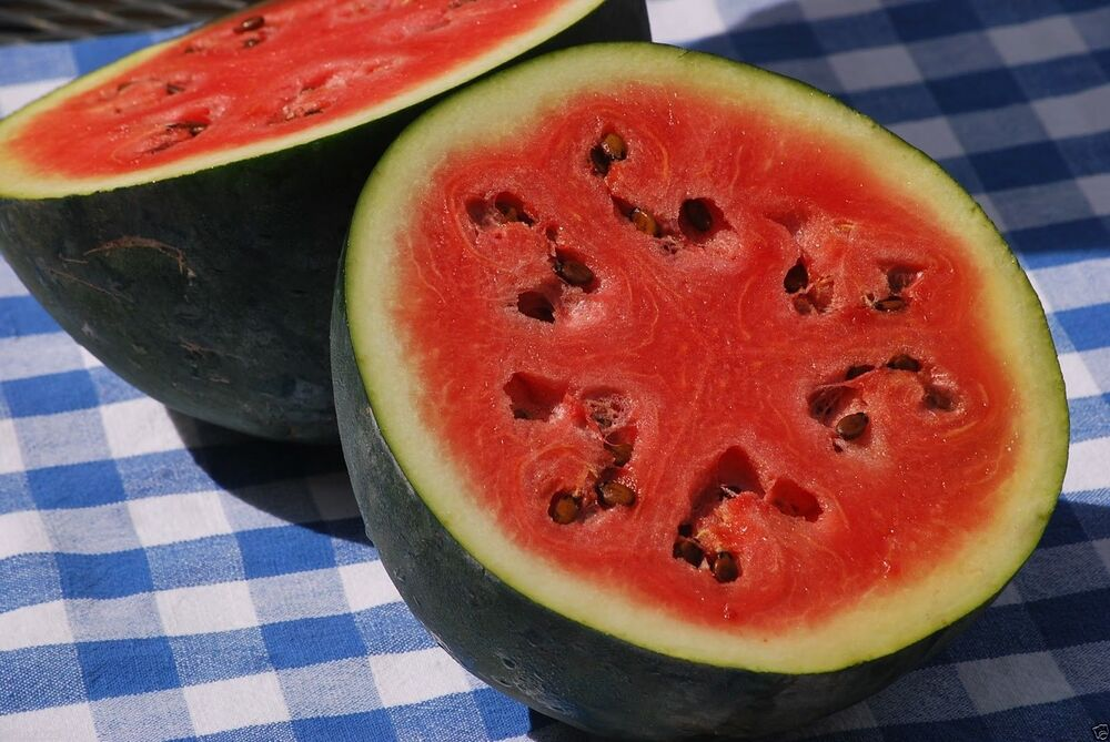 watermelon seeds Shop for watermelon seeds by the packet or by the pound edenbrotherscom offers hundreds of seed varieties, including the finest and freshest vegetable and herb seeds anywhere.