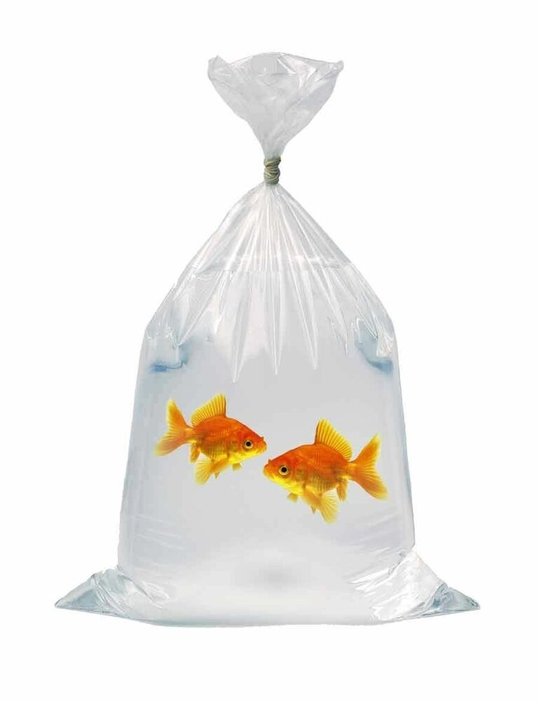 Fish transport bags polythene corals discus marines 200g for Fish in a bag