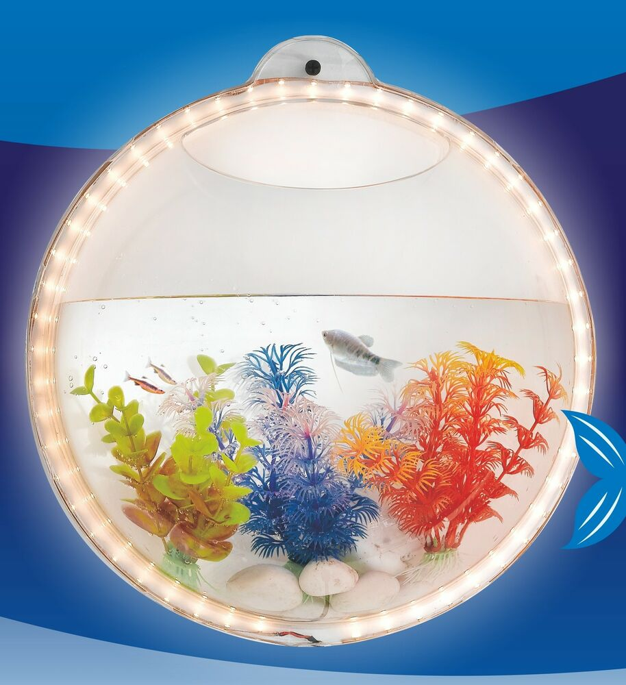 Wall Hanging Mount Beta Fish Bubble Aquarium Bowl Tank with LED light | eBay