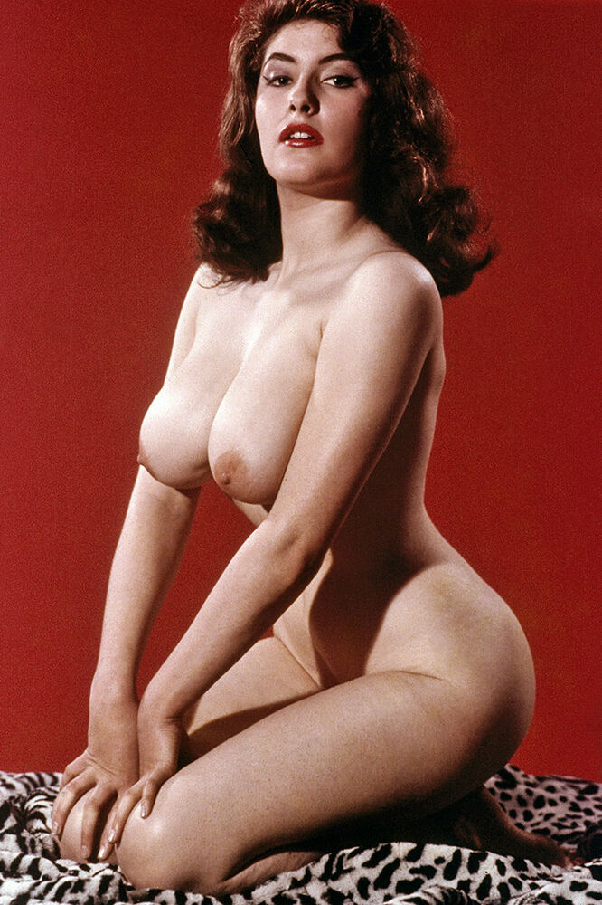 4x6 busty 1960s british pinup ann austin big breasts by