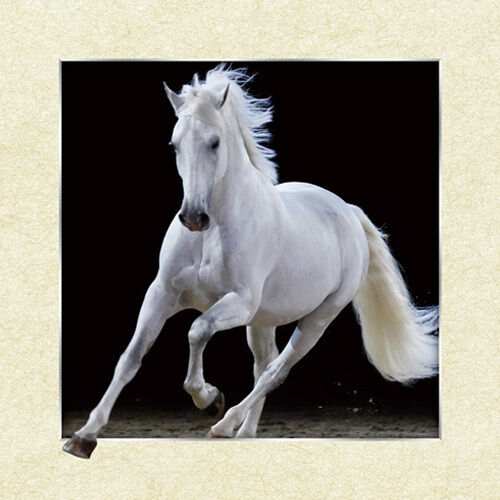 White Horse Lenticular 3D Picture Animal Poster Painting