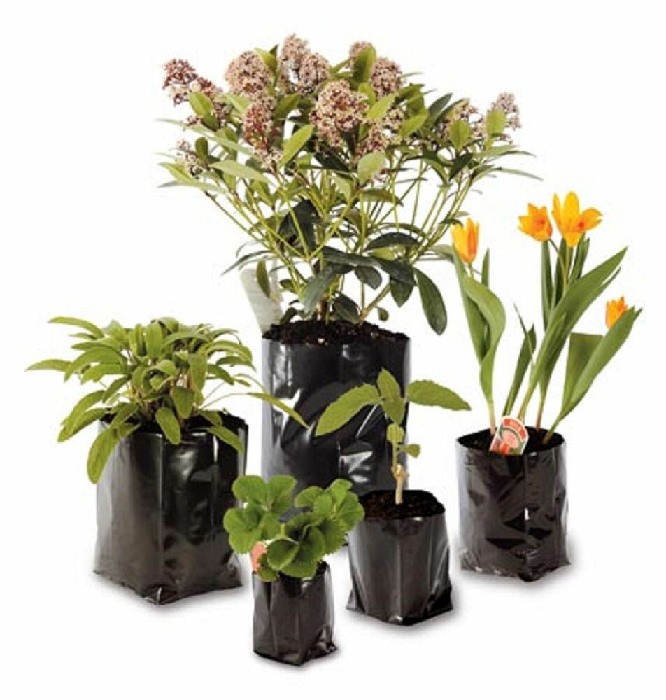 Flowers To Grow In Small Pots: Small Large Strong Plastic Poly Pot Planting Grow Bag