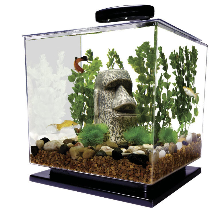 Betta fish tank with filter aquarium kit cube 3 gallon for Filter for betta fish