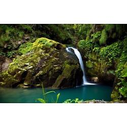 AMAZON RAINFOREST GLOSSY POSTER PICTURE PHOTO trees tropical cool nature 2303